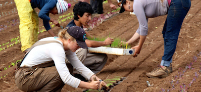 people planting in the u c santa cruz farm and garden