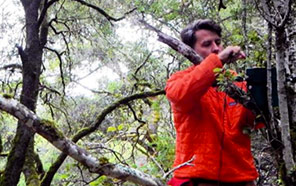 Matthew McKown deploying an acoustic sensor to record calls of marbled murrelets