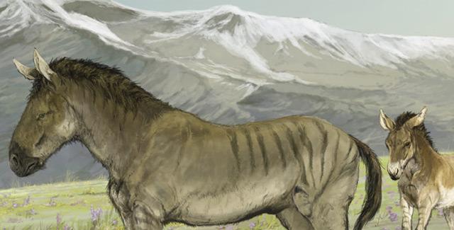A scientific illustration of a family of stilt-legged horses